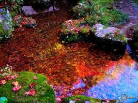 Обои Листья в осеннепм пруду: , Осень