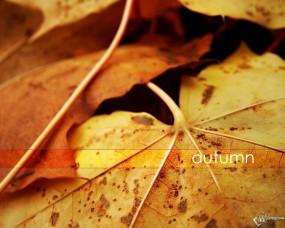 Обои Осень: , Осень