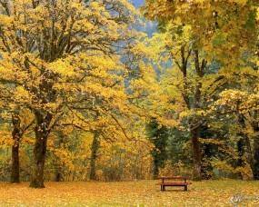 Обои Золотая поляна: , Осень