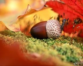 Обои Желудь на фоне рыжего листа: , Осень
