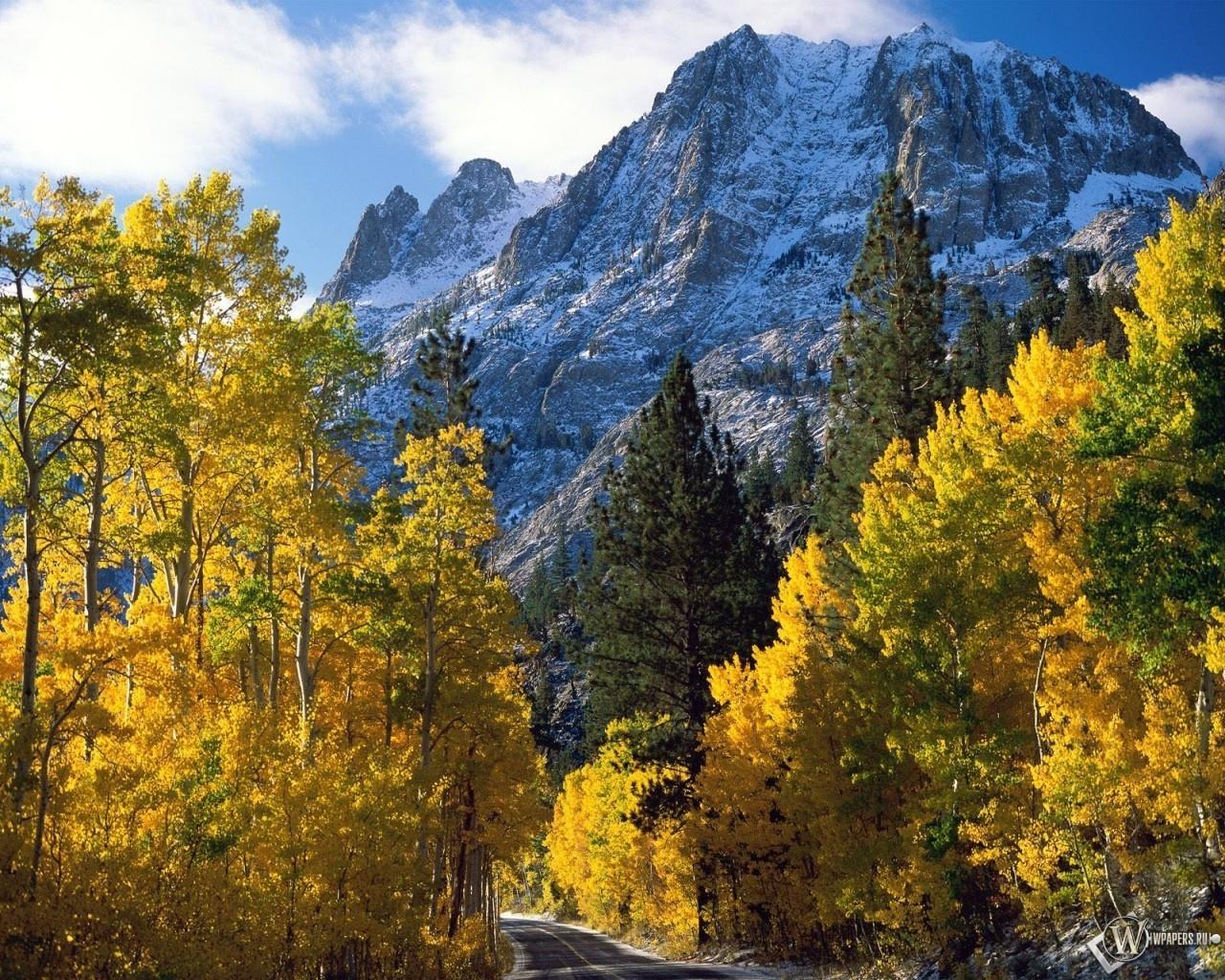 Осенний лес на фоне горы 1280x1024