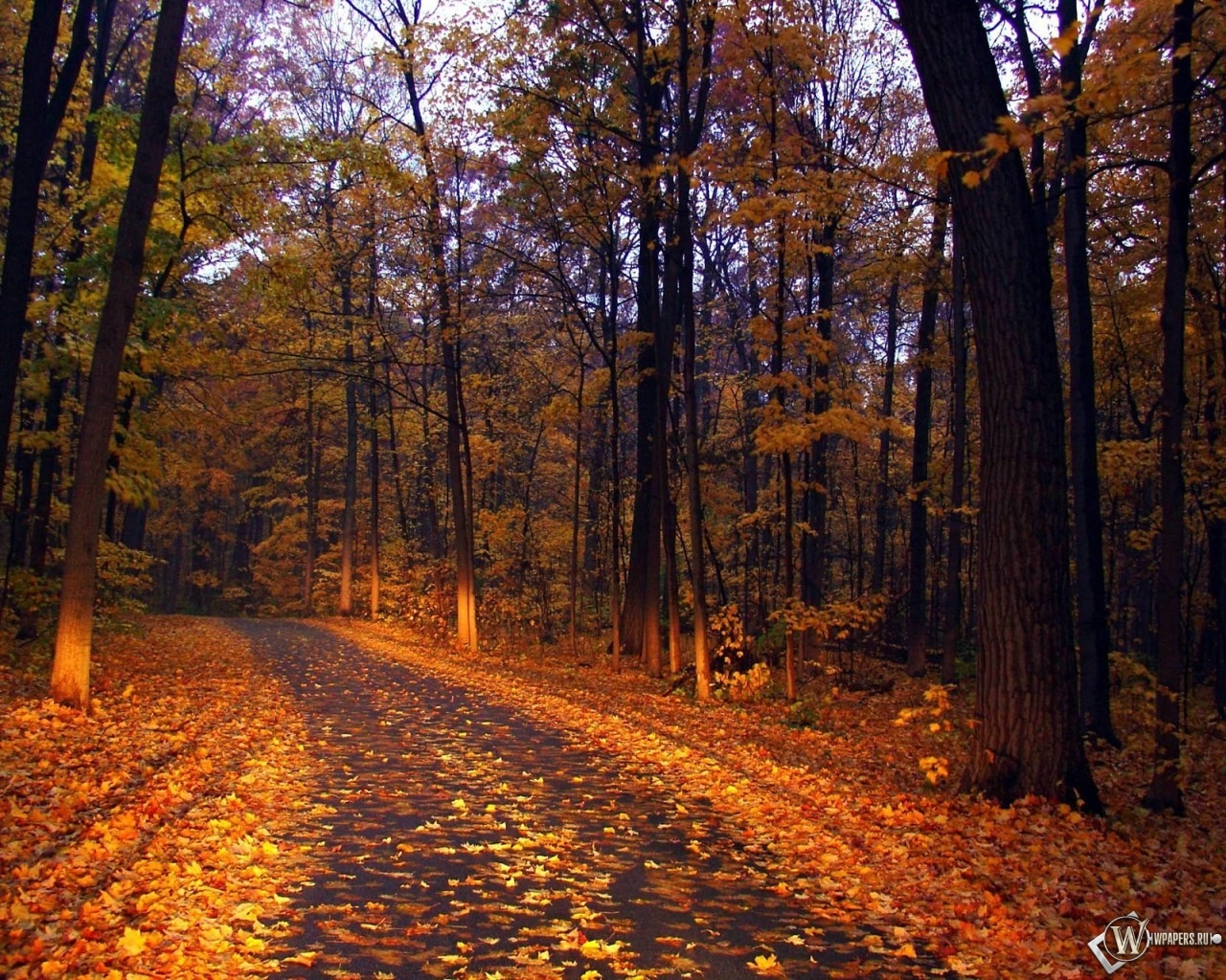 Прогулка по осеннему лесу 1280x1024
