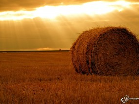 Обои Осеннее поле: Пшеница, Сено, Стог, Поле, Осень