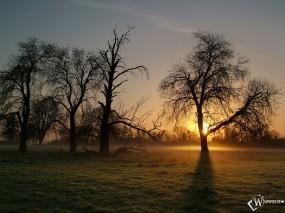 Обои Таинственный лес: Лес, Деревья, Закат, Туман, Осень