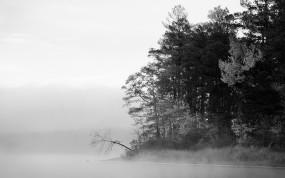 Обои Туманный лес: Лес, Туман, Осень, Осень