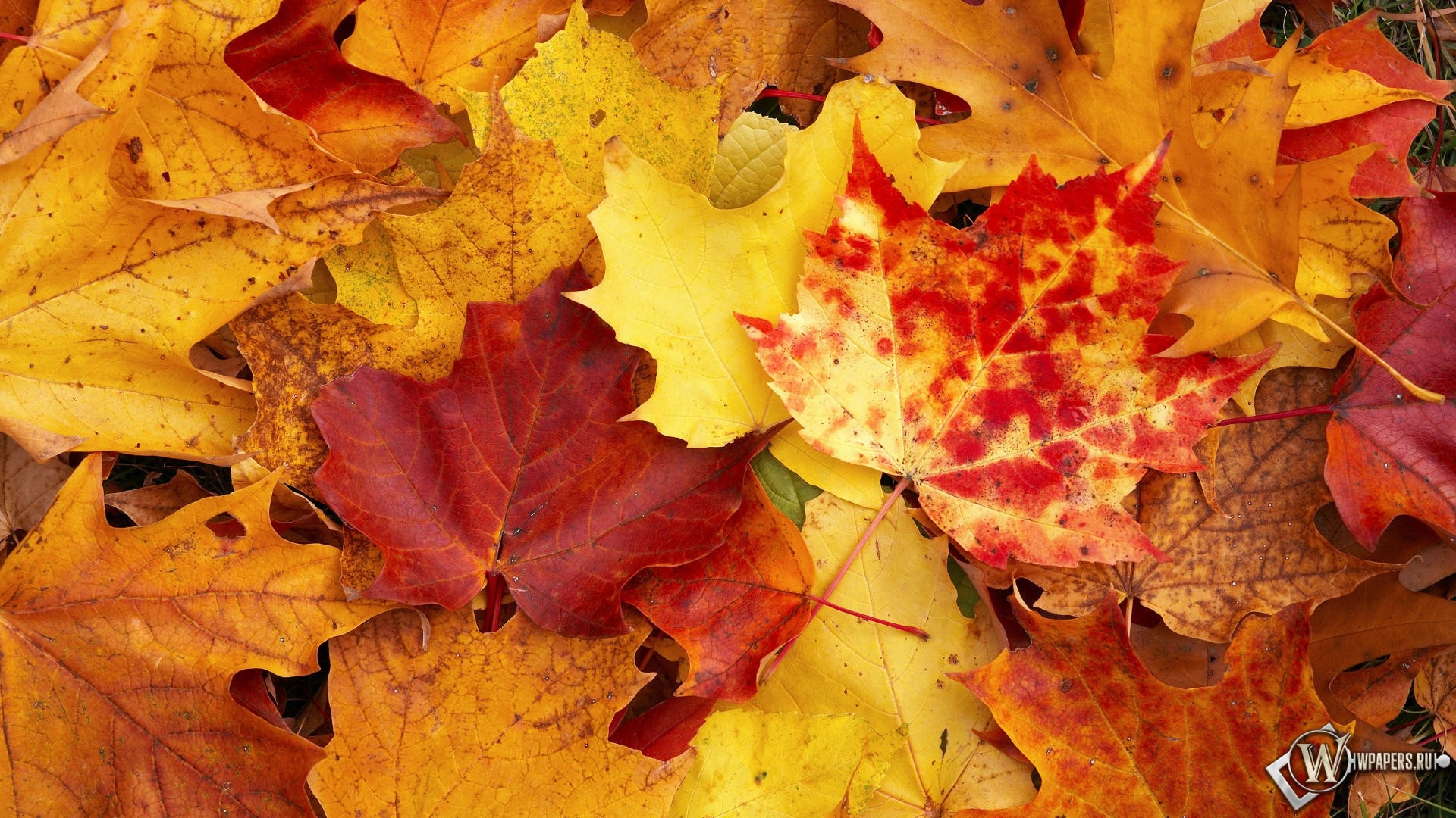 Осенняя листва 1920x1080