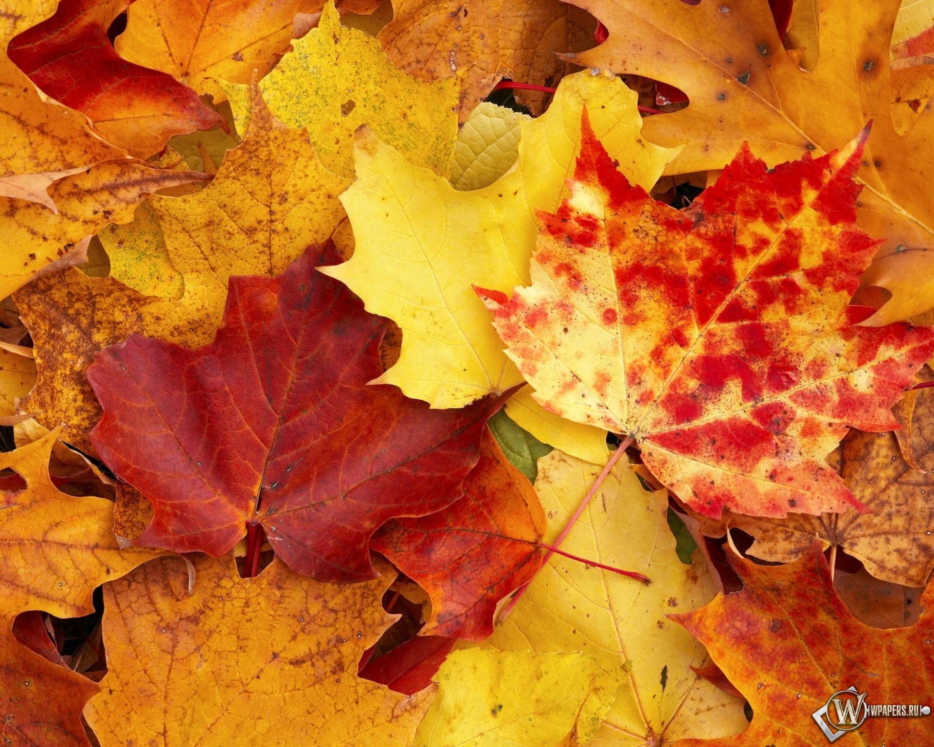 Широкоформатные обои Осенние листья 1920x1200 для рабочего