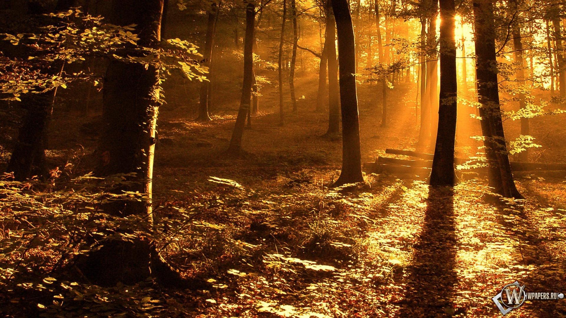 Обои, Свет в лесу, Свет, Лес, Деревья ...: wpapers.ru/wallpapers/nature/Autumn/7378/1920-1080_%C3%90%C2%A1%C3...