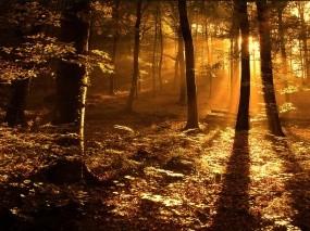 Свет в лесу