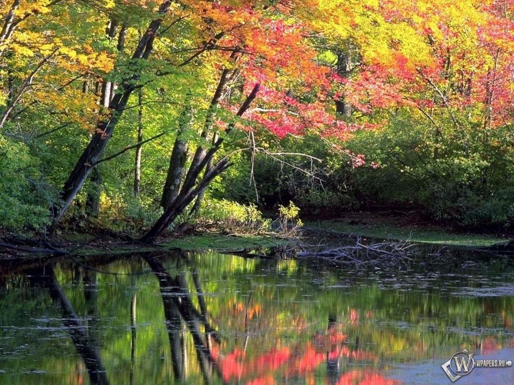 Лес природа осень 1024x768 картинки