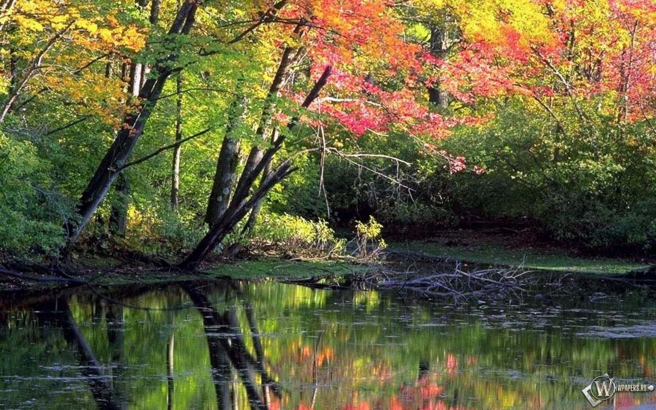 Мирный осенний лес вода лес природа