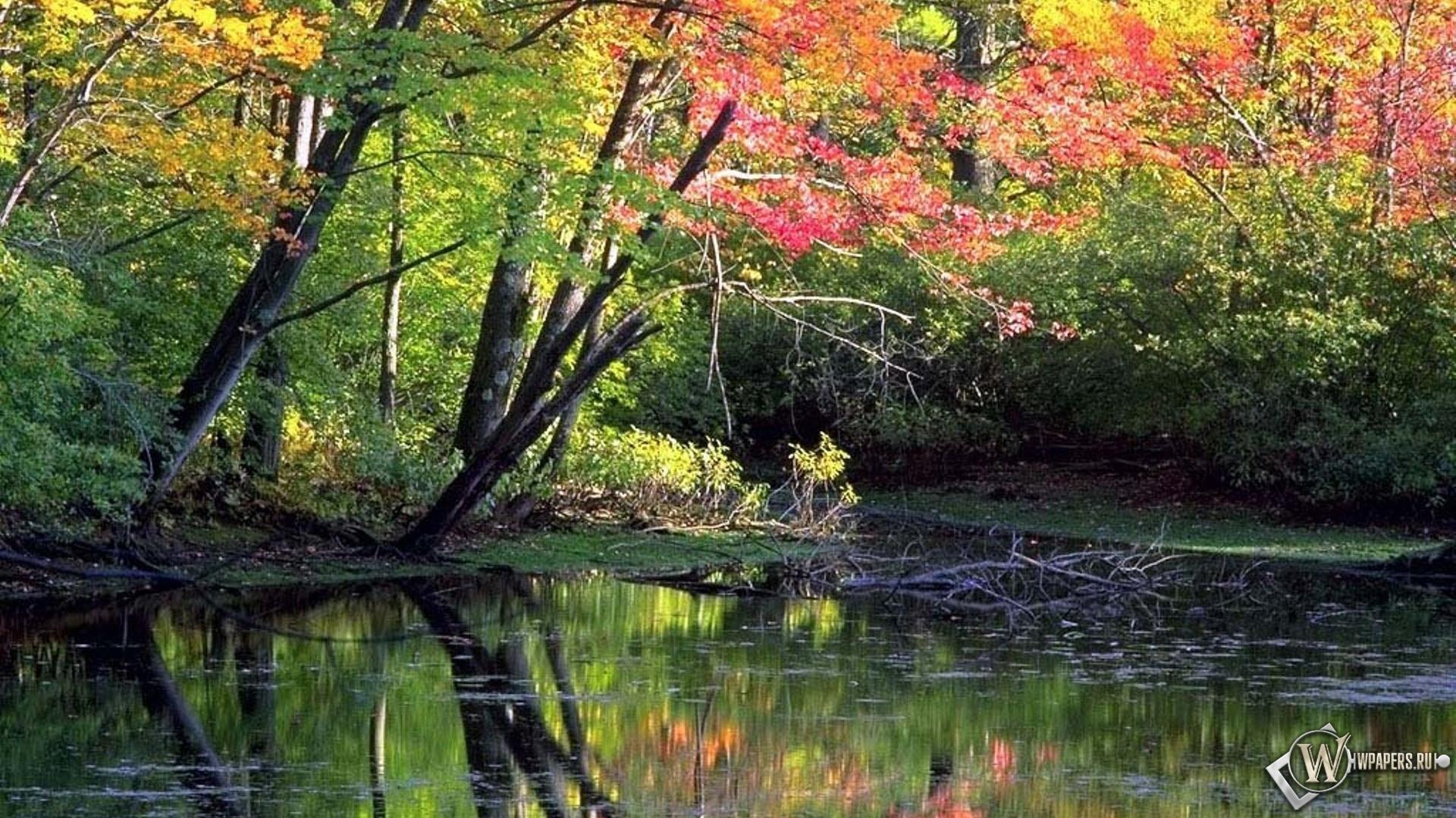 Обои мирный осенний лес вода лес