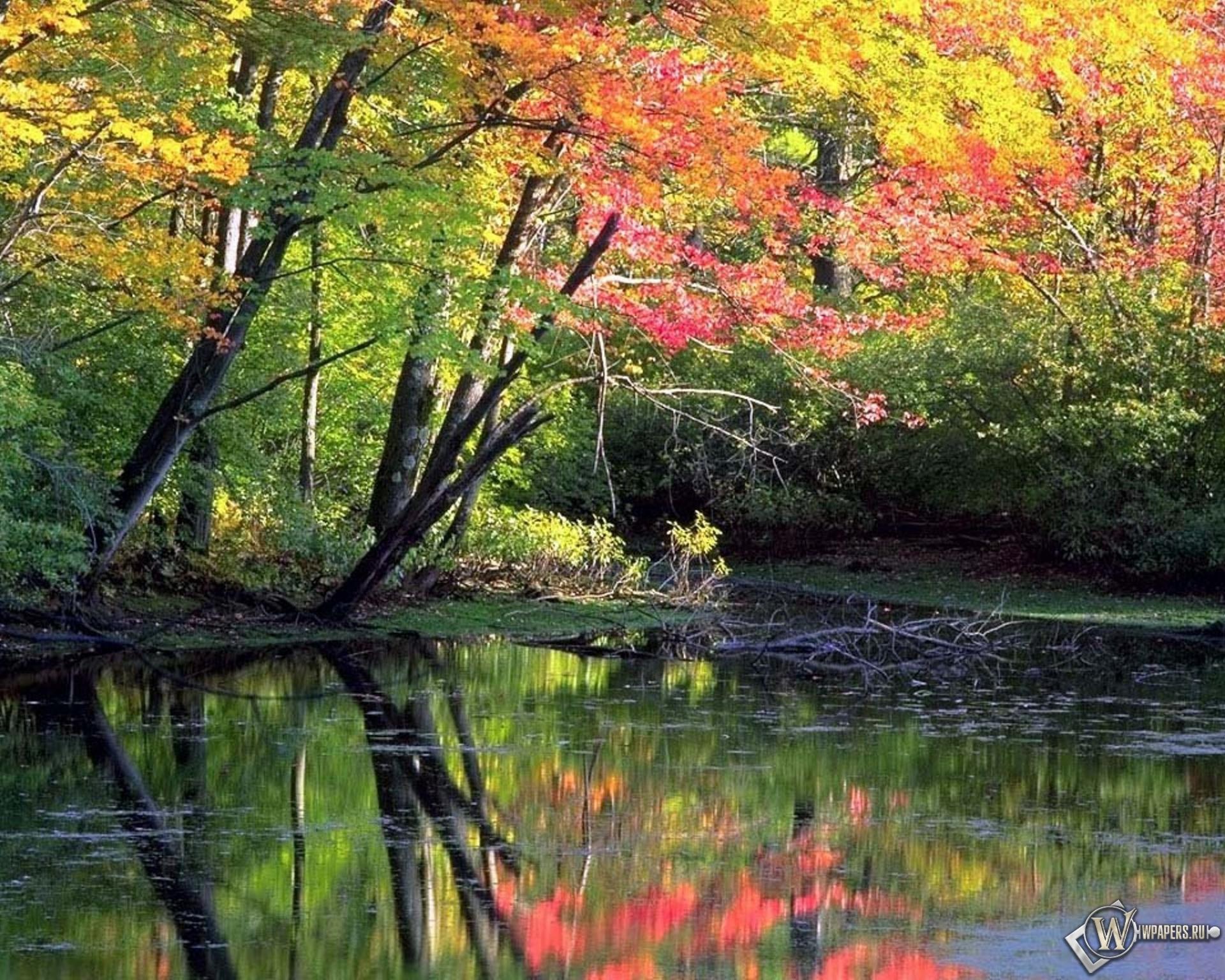Лес природа осень 1920x1536 картинки