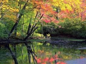 Обои Мирный осенний лес: Вода, Лес, Природа, Осень, Осень