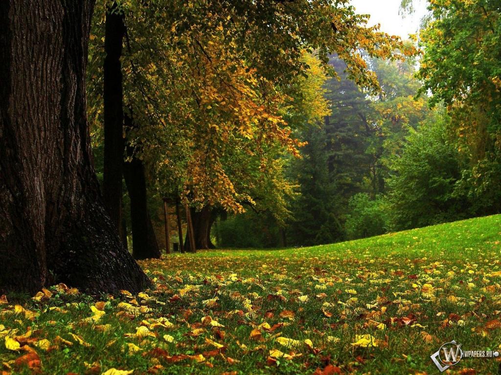Лес лес осень осенний лес 1024x768