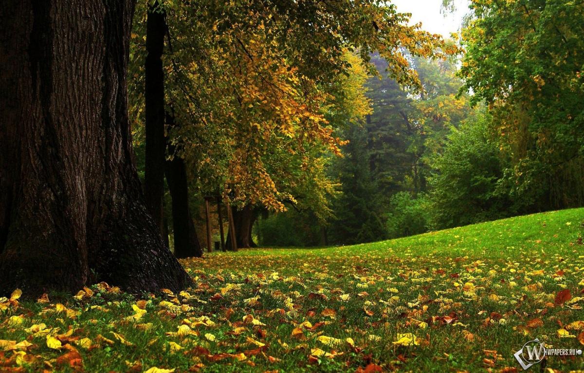 Лес лес осень осенний лес 1200x768