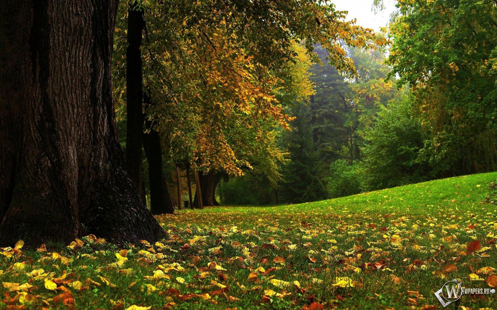 Картинки для kа осенний лес