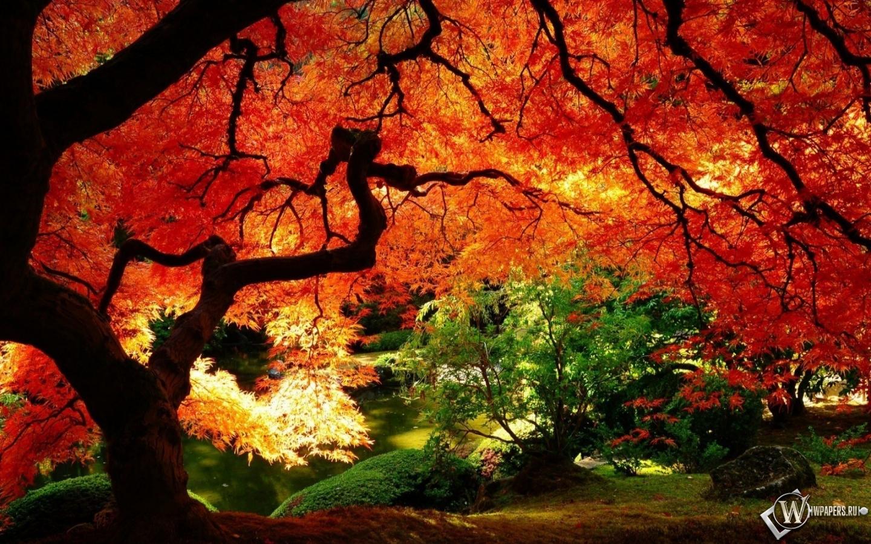 Картинки 1440х900 осенняя природа