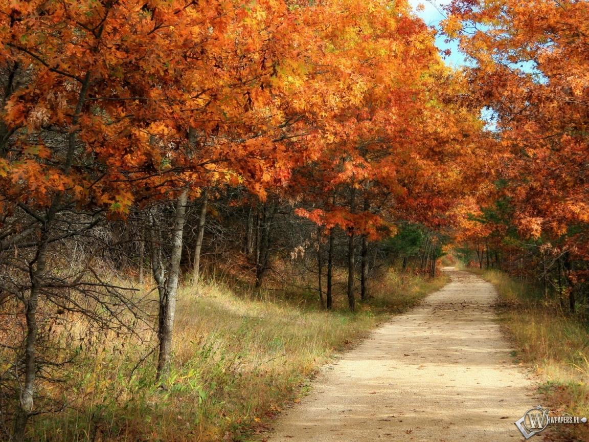 Обои осенний лес лес деревья