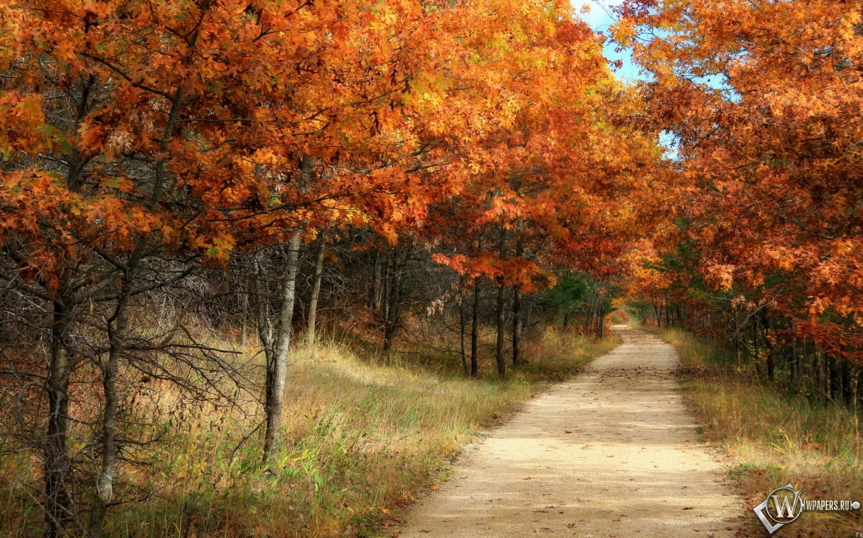 Картинки на рабочий стол осень природа 1440х900