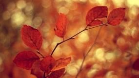Обои Осеннее настроение: Природа, Осень, Ветка, Листья, Оранжевый, Осень