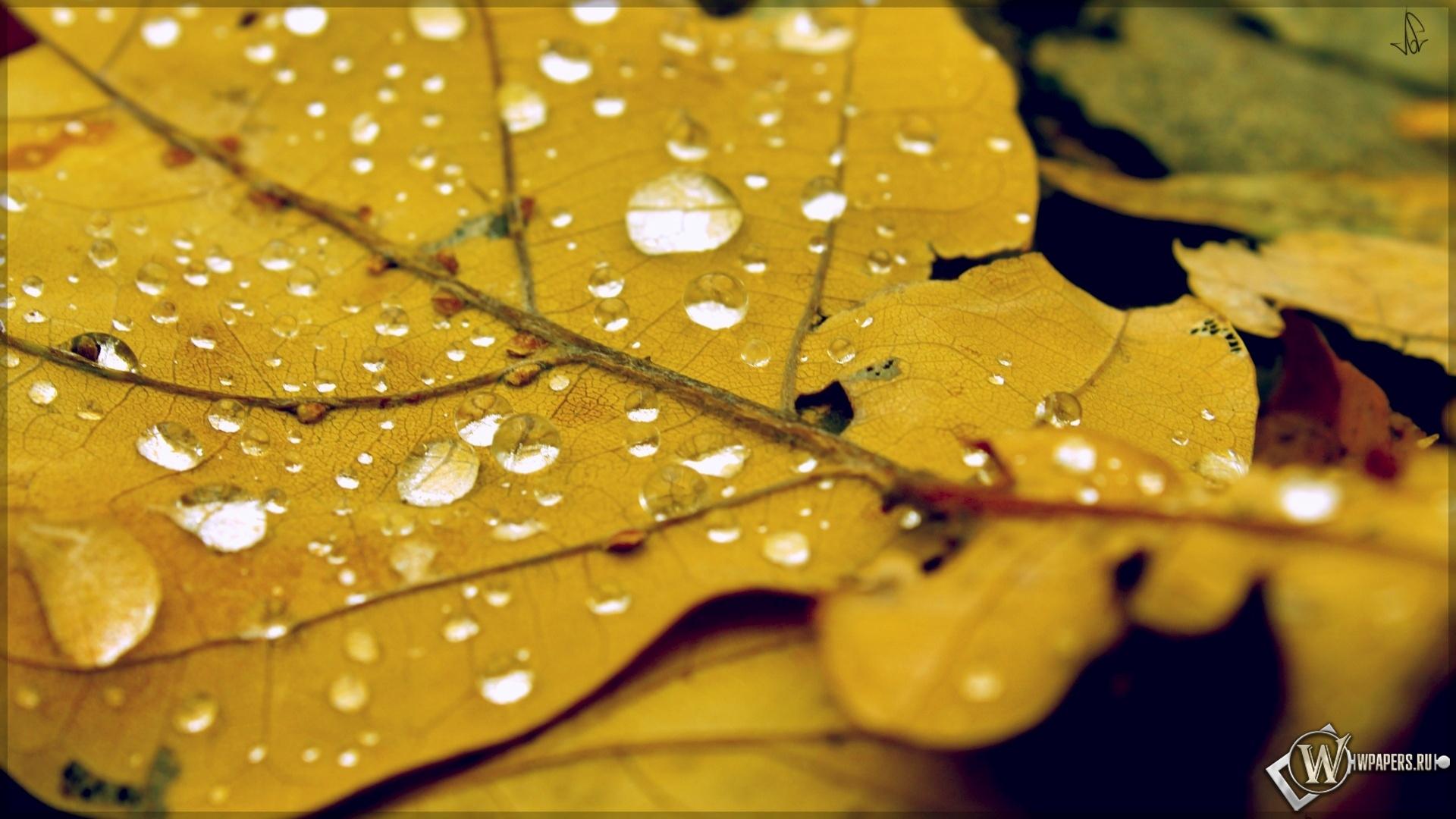 Обои Осенний лист на паутине на размытом фоне на рабочий стол