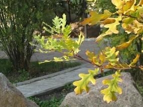 Обои Осенний этюд: Осень, Дуб, Дорожка, Осень