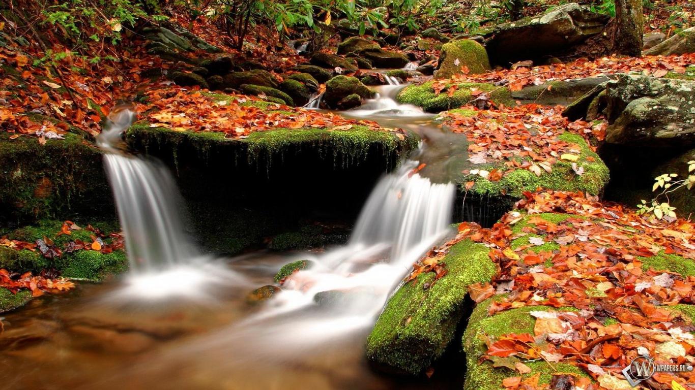 Картинки для рабочего стола осень в лесу