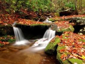 Обои Ручей в осеннем лесу: Вода, Камни, Осень, Листья, Ручей, Осень