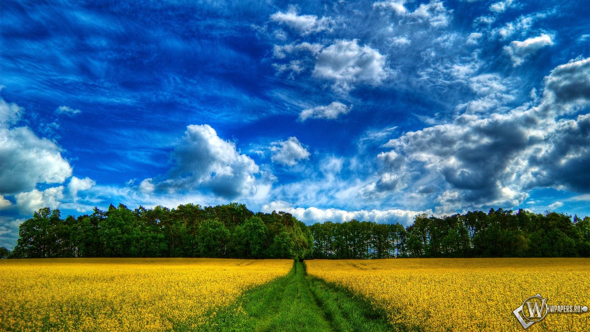 Обои дорога в лес дорога лес поле