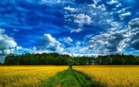 Обои Дорога в лес: Дорога, Лес, Поле, Прочие пейзажи