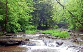Обои Лесная речка: Река, Лес, Мост, Ручей, Прочие пейзажи