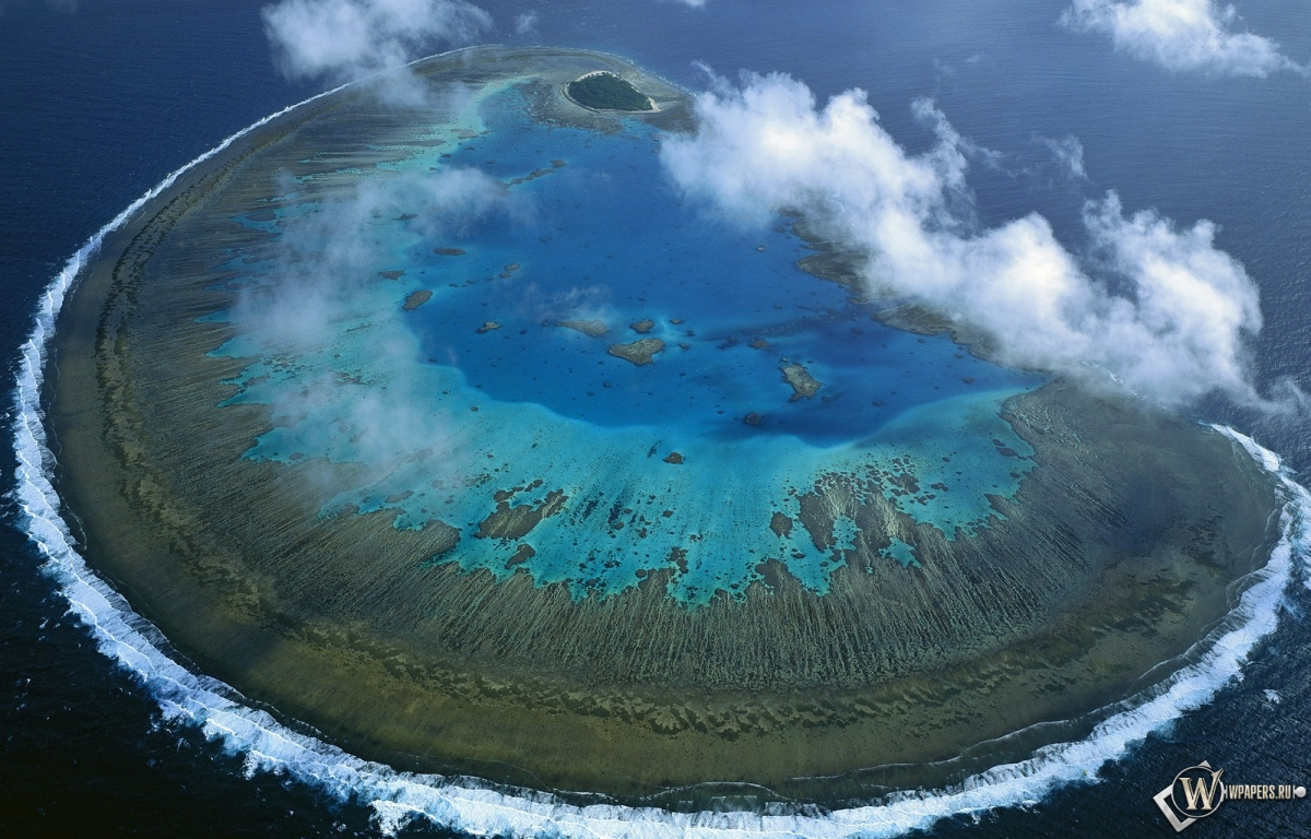 Леди масгрэйв большой барьерный риф