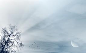 Обои Пейзаж: Свет, Луна, Дерево, Небо, Лучи, Пейзаж, Птицы, Прочие пейзажи