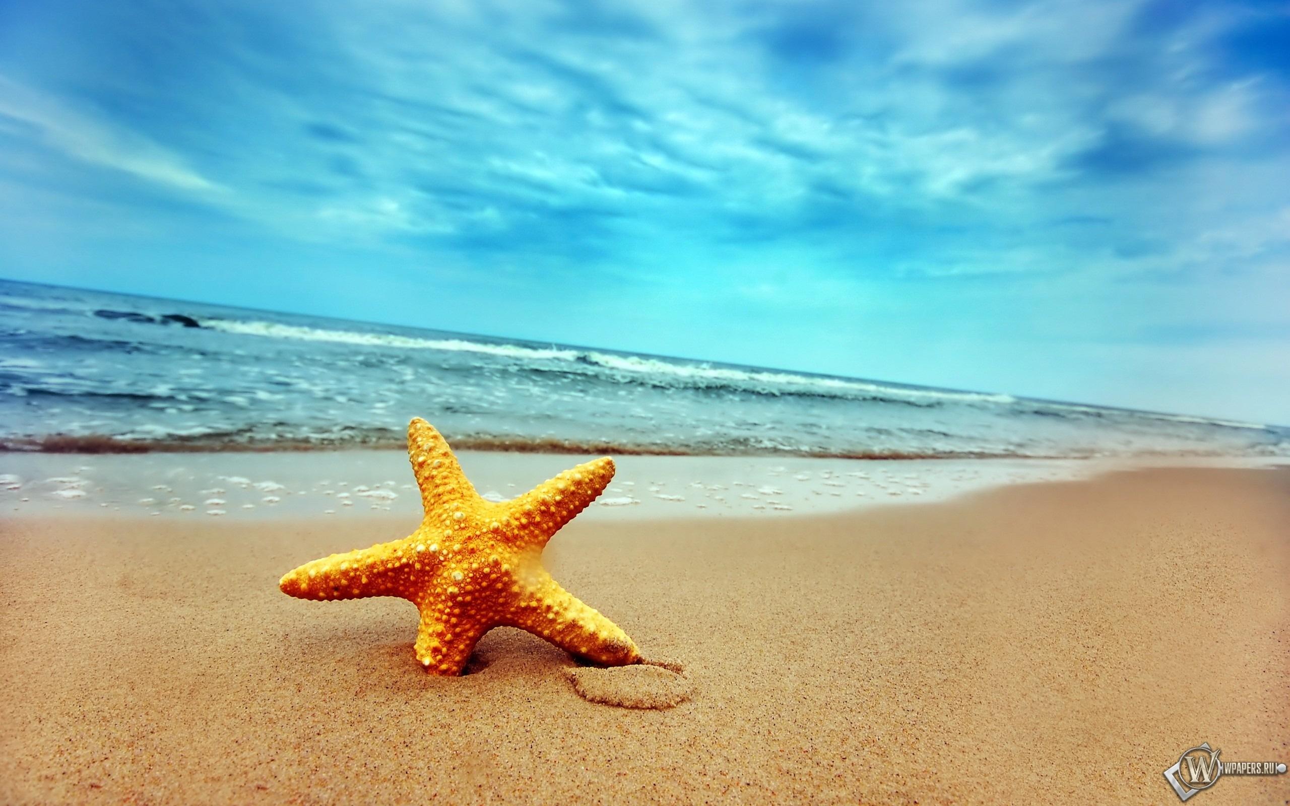 Морская звезда 2560x1600