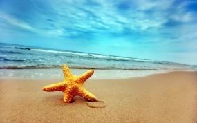Обои Морская звезда: Волны, Песок, Берег, Звезда, Природа