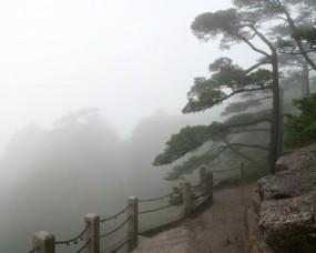 Обои туманная ограда: Деревья, Туман, Ограда, Прочие пейзажи