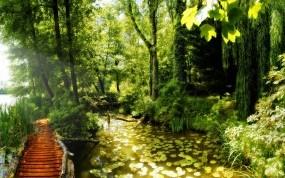 Обои Лесная тропинка: Пруд, Лилии, Тропинка, Прочие пейзажи
