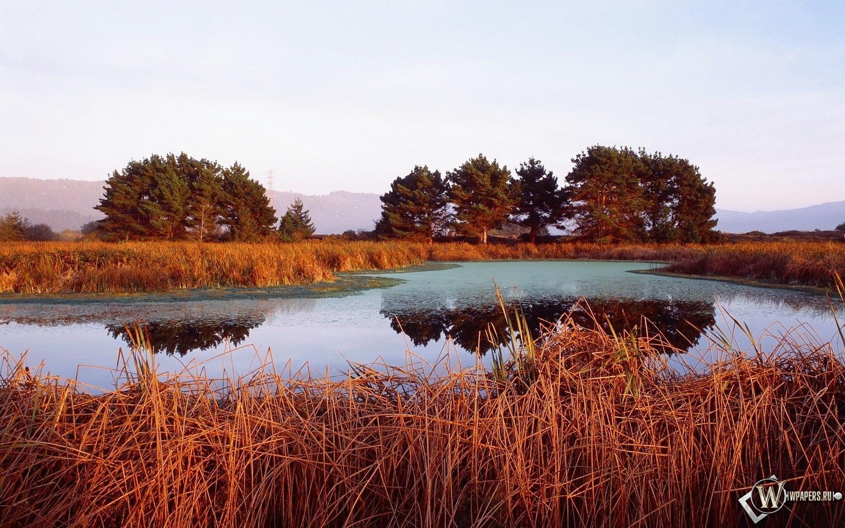 Камыши на озере 1680x1050