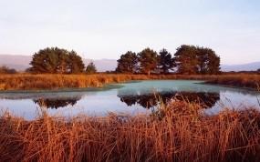 Обои Камыши на озере: Деревья, Озеро, Камыши, Прочие пейзажи