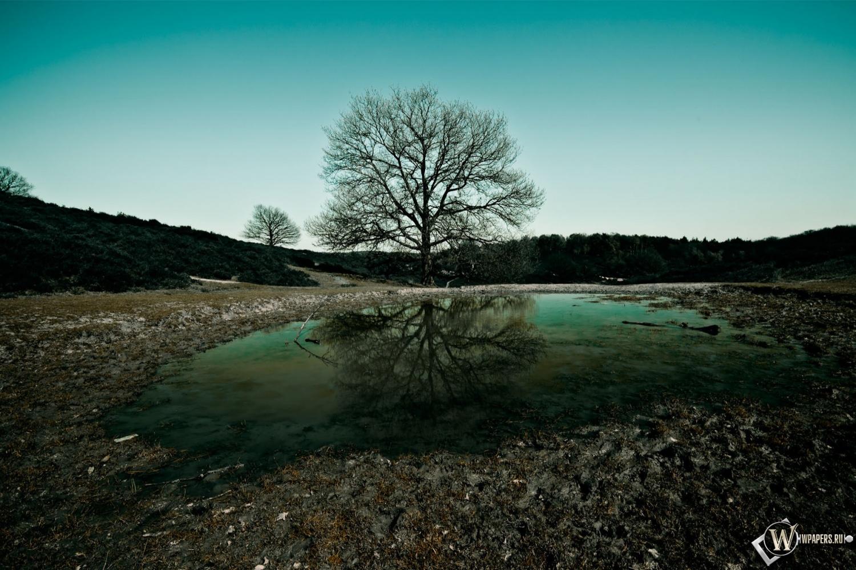 Обои дерево на фоне озера на рабочий