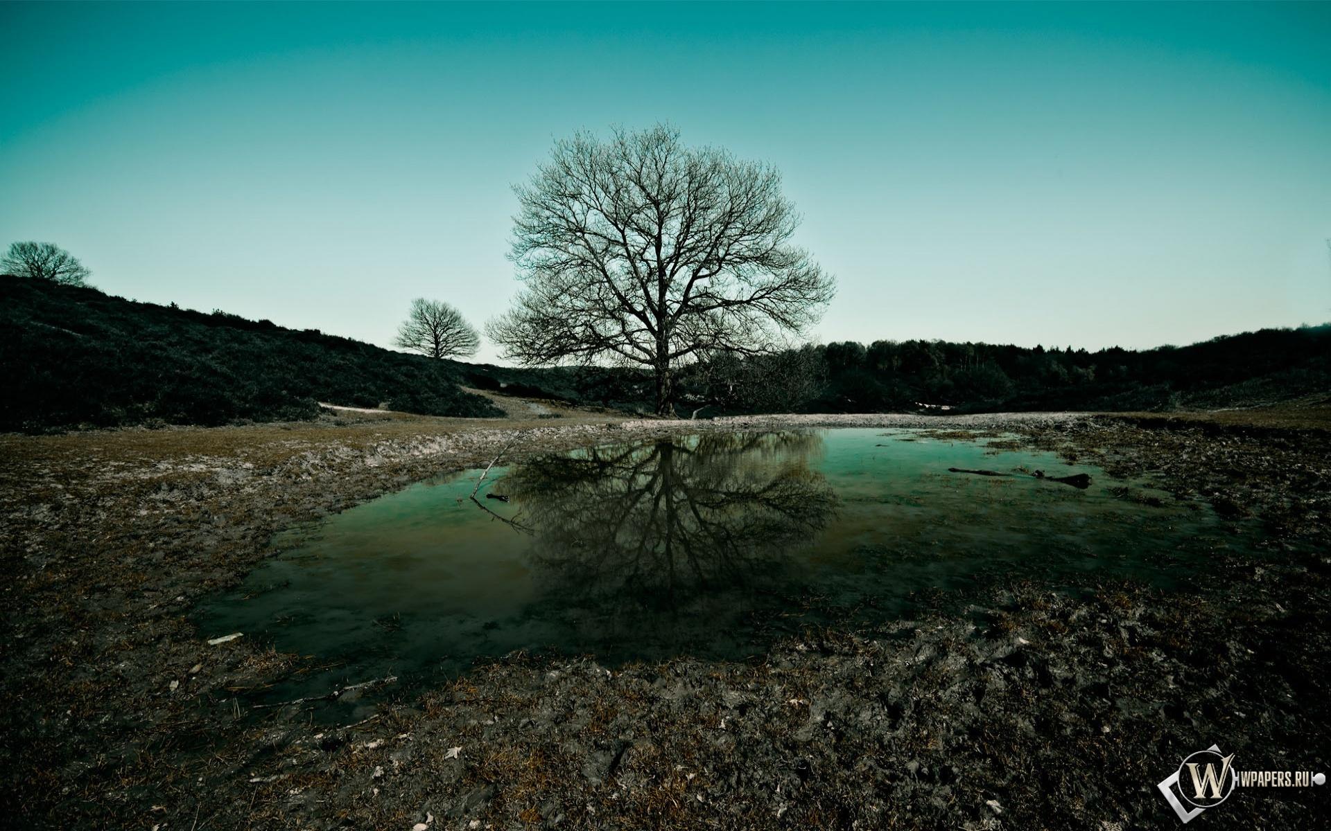 Дерево на фоне озера 1920x1200