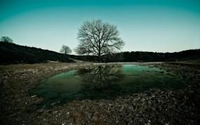 Обои Дерево на фоне озера: Вода, Природа, Фото, Вечер, Дерево, Небо, Пейзаж, Прочие пейзажи