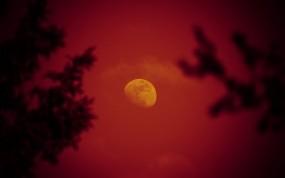 Обои Красная луна: Деревья, Ночь, Луна, Небо, Прочие пейзажи