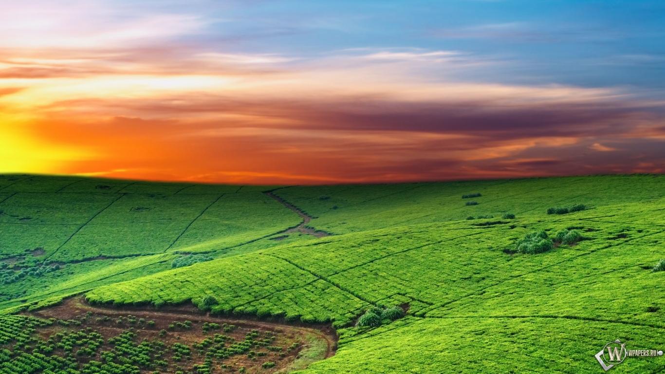 Обои красивые поля линии поля небо