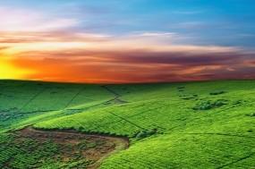 Обои Красивые поля: Линии, Поля, Небо, Горизонт, Прочие пейзажи