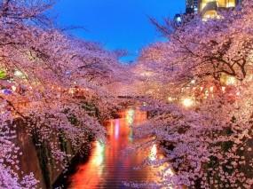 Обои Японский сад: Огни, Япония, Сакура, Канал, Прочие пейзажи