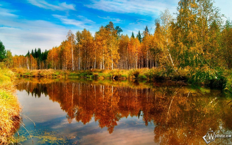 Обои озеро в лесу вода деревья озеро