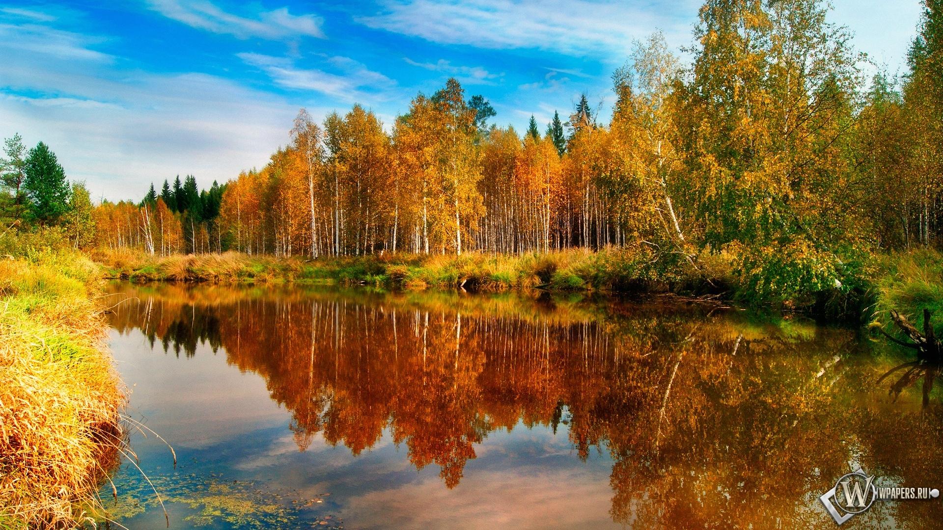 Озеро в лесу 1920x1080