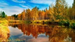 Обои Озеро в лесу: Вода, Деревья, Озеро, Небо, Прочие пейзажи
